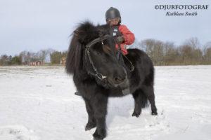 Flicka på ponny