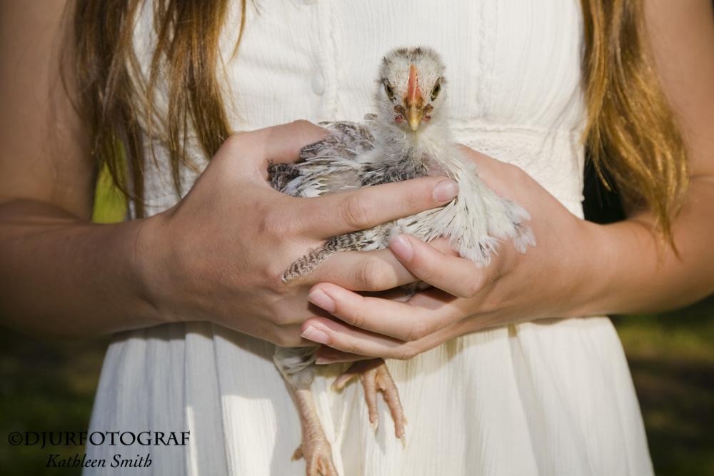 Flicka håller en kyckling