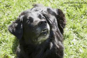 Porträtt av blandrashund