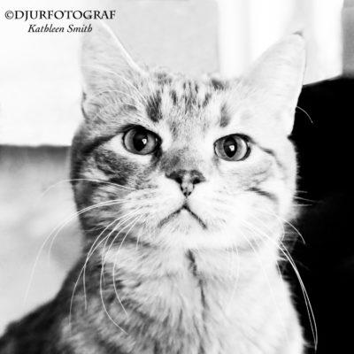 Ericas fina katter