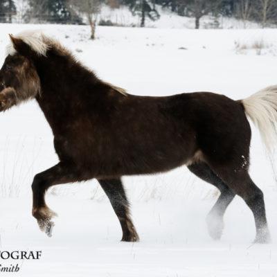 Vackra Isold i snön